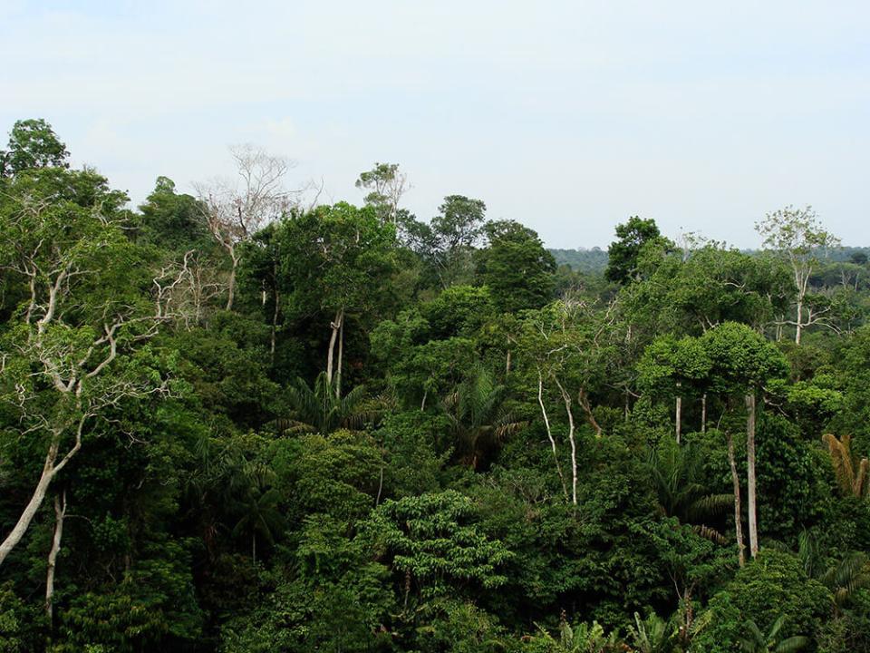 rainforest-canopy